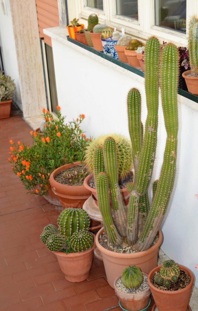 La cactacee più piccole sistemate sul davanzale che affaccia sul balcone.