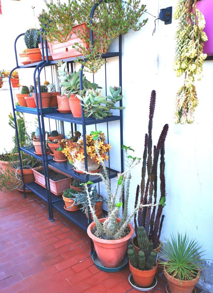 Un nuovo scaffale porta piante per sfruttare l'altezza.