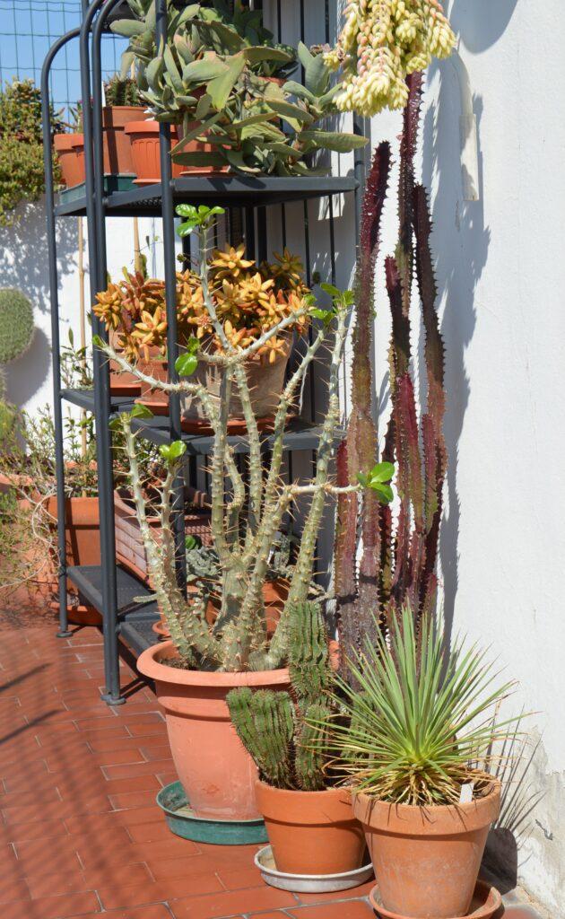 Le piante succulente e originarie dei climi caldi (euphorbie) prediligono il balcone assolato a sud.