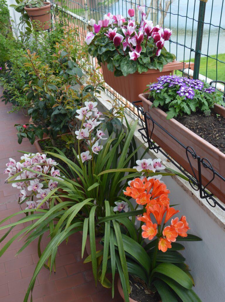 Il mio balcone esposto a nord-est l'ideale per le piante più delicate e da fiore.