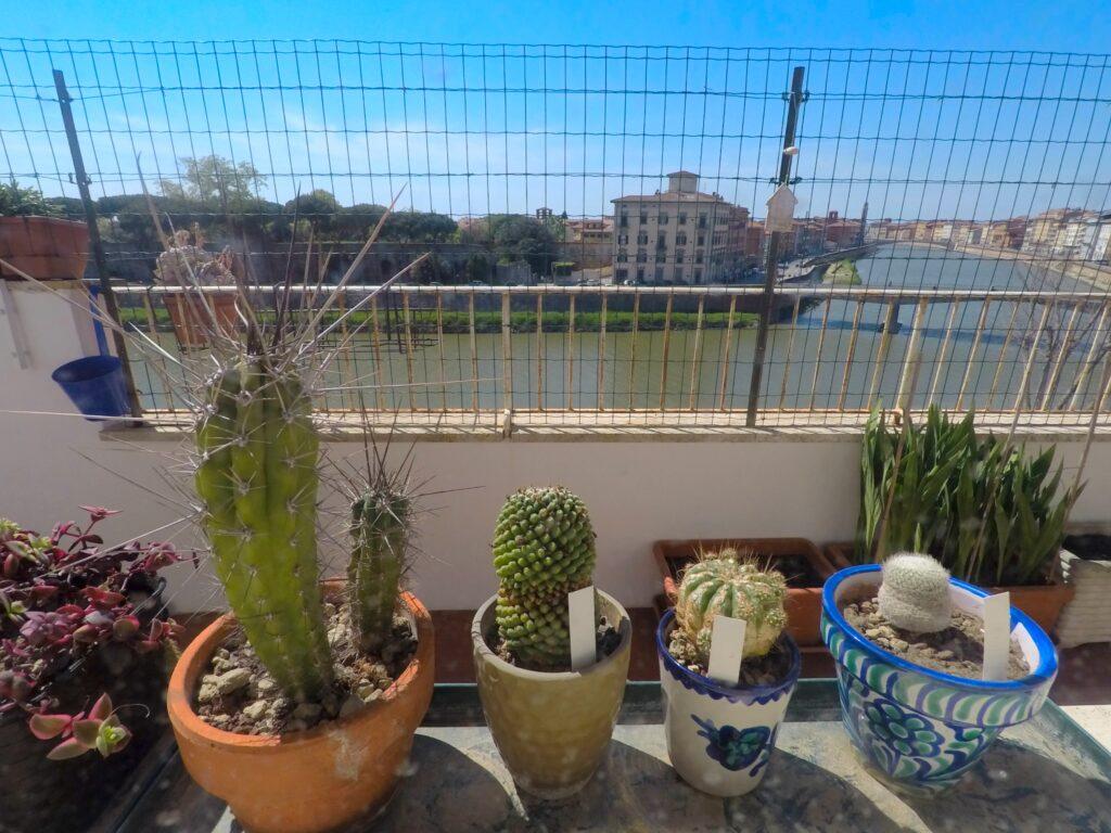 Alcuni cactus affacciati alla finestra.