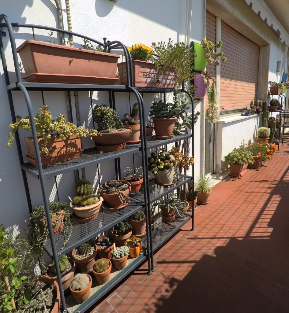 Il balcone esposto a sud con le succulente e i cactus: un vero e proprio giardino mediterraneo.