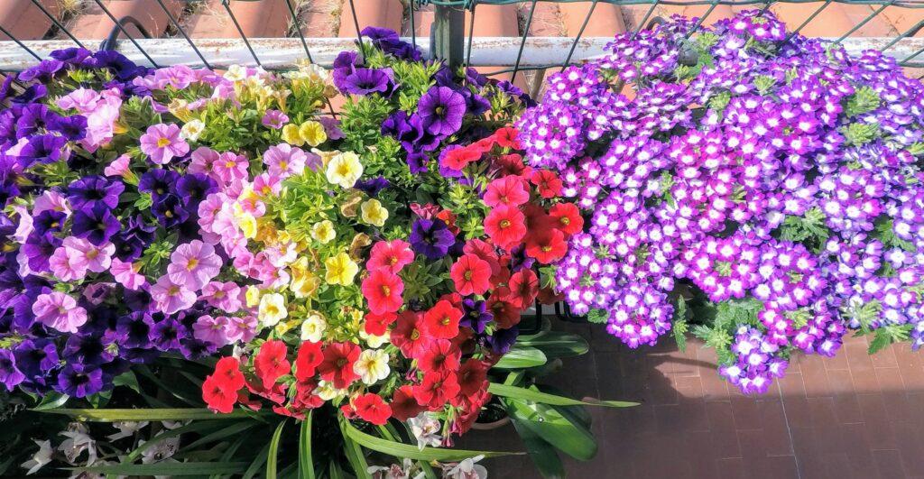 Finalmente i fiori estivi sul balcone!